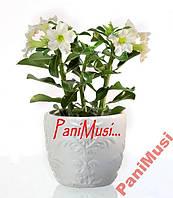 Белая роза пустыни Инструкция + в подарок семена