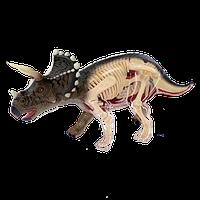 Объемная анатомическая модель 4D Master - Динозавр Трицератопс