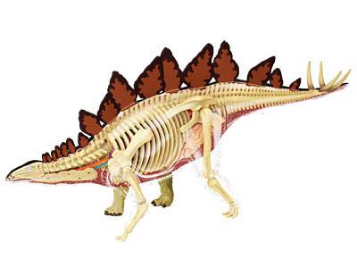 Объемная анатомическая модель Стегозавр 4D Master (26095)