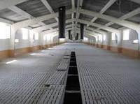 Строительство помещений для откорма на щелевых бетонных полах