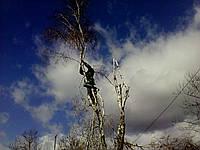 Обрезка деревьев Киев , фото 1