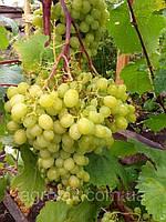 Купить набор СЗР по защите винограда на 2 сотки Байер