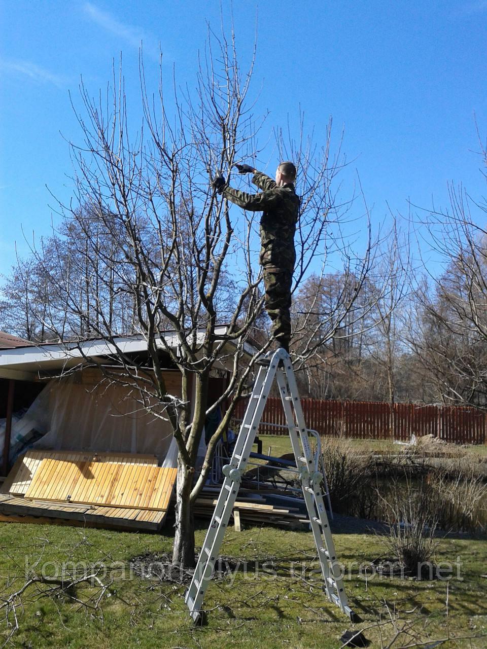 Услуги садовника Киев Обрезка садовых деревьев в Киеве