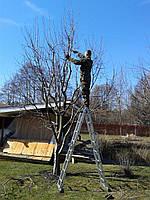 Послуги садівника Київ Обрізка садових дерев у Києві