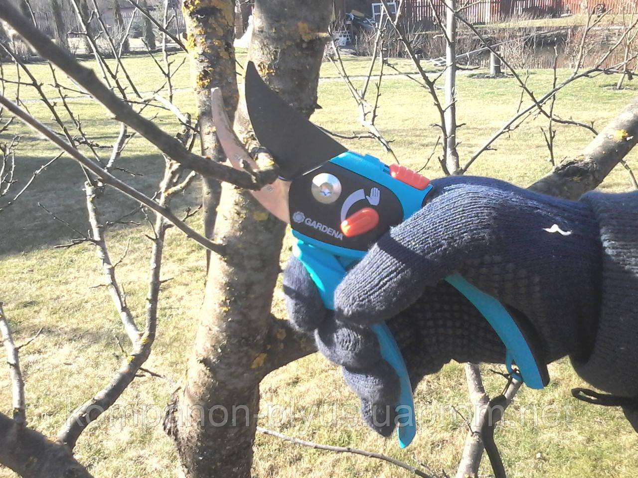 Правильная обрезка плодовых деревьев Обрезка садовых деревьев в Киеве