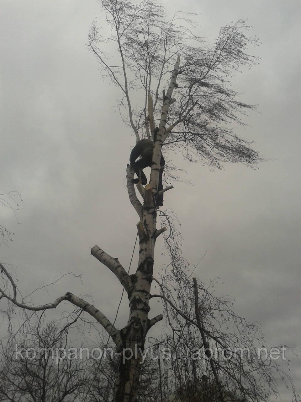 Удаление обрезка деревьев
