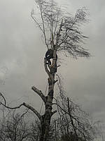 Видалення обрізка дерев