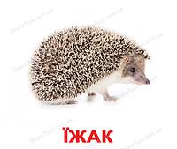"""Карточки  большие украинские ламинированые """"Дикие животные"""""""
