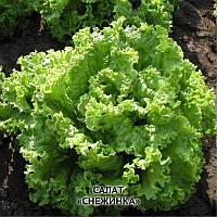 Салат латук Снежинка раннеспелый, листовой сорт