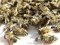 Подмор пчелиный, высококачественный