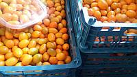 фрукты кумкват