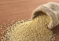 Мука из семян амаранта (код 05629)