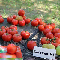 Бостина F1 семена томата