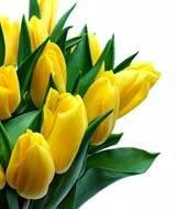 Купить тюльпаны оптом житомыр доставка цветов по кирову и области