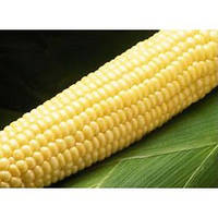 Бостон F1 семена кукурузы