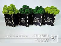 """Брендированные сувениры со мхом от """"Artis Green"""""""