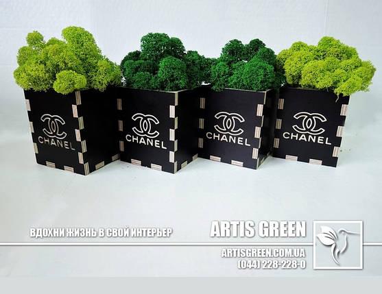 """Брендированные сувениры со мхом от """"Artis Green"""", фото 2"""