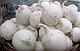 Семена лука Гледстоун \ Gladstone 10000 семян  Bejo Zaden, фото 5