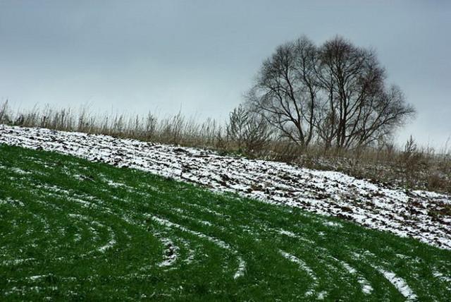Весна принимает необратимый характер: в «Гидрометцентре» рассказали, сколько озимых будут пересевать