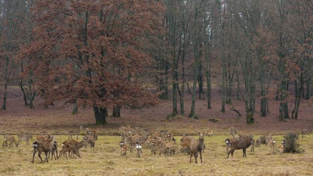 Уникальные места Украины: единственная ферма по разведению маньчжурских оленей