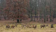 Унікальні місця України: єдина ферма з розведення оленів маньчжурських