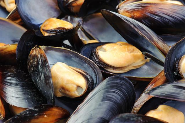 ТОП-5 импортеров моллюсков в Украину