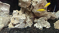 Камни для аквариума Кенийский камень