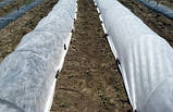 Агроволокно Premium-Agro белое (19 г/м2, 4,2х100 м), фото 9