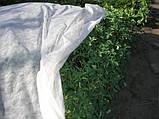 Агроволокно Premium-Agro белое (19 г/м2, 4,2х100 м), фото 6
