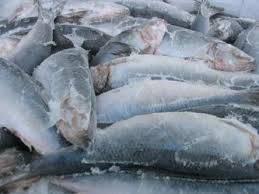 Рыба свежая, охлажденная, замороженная