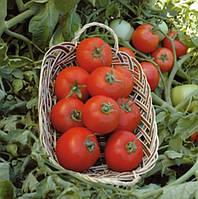 Полбиг F1 - семена томата детерминантного, 5 г, Bejo (Бейо), Голландия