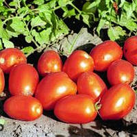 Бенито F1 - семена томата детерминантного, 5 г, Bejo (Бейо), Голландия