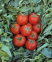 Топспорт F1 - семена томата детерминантного, 5 г, Bejo (Бейо), Голландия