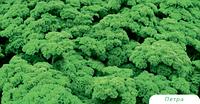 Петра - семена петрушки кудрявой, 50 г, Bejo/Бейо (Голландия)