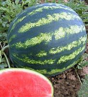 Бонта F1 - семена арбуза, 1000 семян, Seminis/Семинис (Голландия)