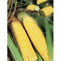 Трофи F1 - кукуруза сахарная, 5 000 семян, Seminis (Семинис) Голландия