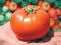 Бобкат F1 - томат детерминантный, 1000 семян, Syngenta (Сингента), Голландия