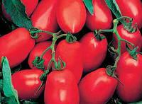 Улиссе F1 - томат детерминантный, 2500  семян, Syngenta (Сингента), Голландия