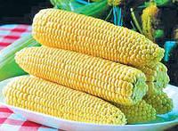 Спирит F1 - кукуруза сахарная, 100 000 семян, Syngenta (Сингента), Голландия