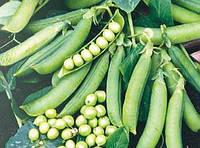 Преладо - горох овощной, 100 000 семян, Syngenta (Сингента), Голландия