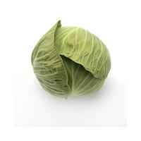 Секома F1 - капуста белокочанная, 1000 семян, Rijk Zwaan (Рийк Цваан), Голландия