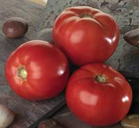 Белла Росса F1 - томат детерминантный, 1000 семян, Sakata (Саката), Япония