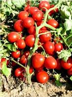 Бриксол F1 - томат детерминантный, 10 000 семян, United Genetics