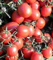 Уно Россо F1 - томат детерминантный, 10 000 семян, United Genetics