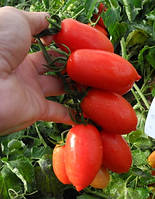 Полличино F1 (Брисколино F1) - томат детерминантный, 10 000 семян, United Genetics