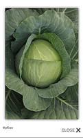 Кубок F1 - капуста белокочанная, 10 000 семян, Clause (Клоз) Франция