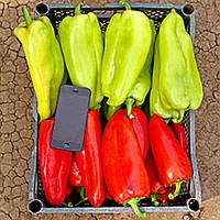 Бугатти - перец сладкий, 10.000 семян, Украина