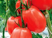 Наско 245 sl F1 - томат детерминантный, 500 семян, Nasko Украина