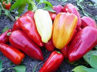 Данай F1 - перец сладкий, 500 семян, Nasko Украина