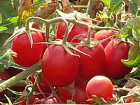 Калиендо F1 - томат детерминантный, 25 000 семян, Esasem Италия